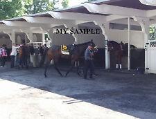 STEPHANIE'S KITTEN 8 by 10 PHOTO 2014 Horse Race BELMONT PARK Breeders Cup #6
