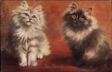Pair of Long-Haired Cats THE RIVALS Alfred Stiebel Alpha Series Postcard