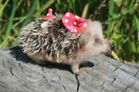 Hedgehog felted collectible handmade toy - art toy, soft sculpture