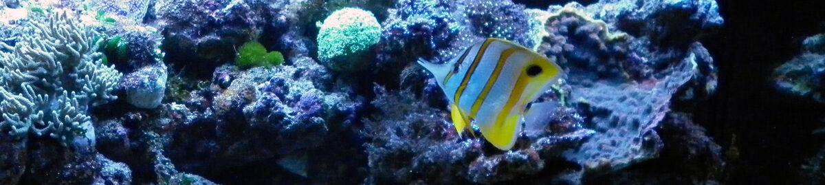 Aquariums and Reptiles Cranbourne