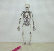 "Miniature Economical Plastic Skeleton for Halloween, 6"" Tall: DOLLHOUSE 1/12"