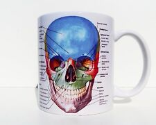Anatomy Of Skull Human Skull Medicine Student Coffee Mug Tea Cup Gift Doctor