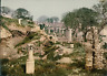 Carthage. Jardin du musée II.   vintage photochrom from Photochrom Zurich archiv