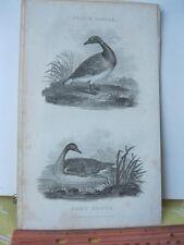Vintage Print,BLACK+GREY GOOSE,Rural Sports,Bunney+Gold,1801