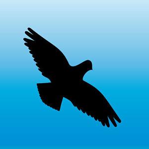 Avviso Adesivo 10cm Nero Astore Uccello Spavento Finestra Protezione Deko Folie