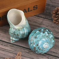 1Pc Natural Rare Real Sea Shell Conch Stunning Healing Decor DIY Ocean Cra Hs