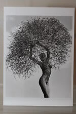 "HERB RITTS : ""NEITH WITH TUMBLEWEED"" Kunst-Postkarte"