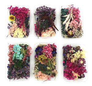 Echte Natürliche Getrocknete Blumen / Blüten / Blume / Blütenblätter / Blätter