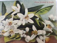 C 1911 Orange Blossoms in Florida St Augustine Flag Cancel Antique Postcard