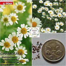100 GERMAN CHAMOMILE SEEDS(Matricaria chamomilla); Versatile medicinal herb