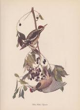 "Birds of america Audubon,""lithograph art colour print YELLOW BELLIED SAPSUCKER"