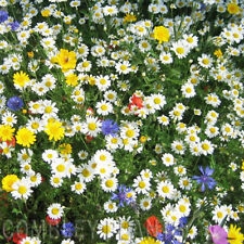 WILDFLOWER ANNUAL CORNFIELD SEED MIX BULK PACK 100 GRAMS - poppy, cornflower etc
