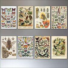 Vintage Vittoriano Uccellini Api Farfalle e Botanico calamite da frigo set di 8