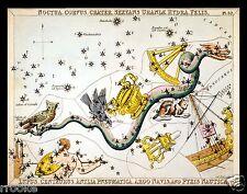 Centaurus CENTAUR Constellation ZODIAC Chart ASTRONOMY Astrology Poster Print