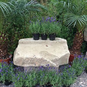 Antique Garden Bench Herbs Table Planting Table Natural Seat Masonry