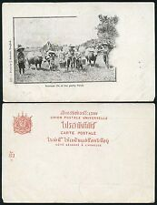 THAILAND SIAM PPC PADDY FIELDS c1910