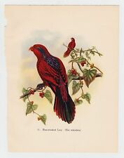 BLUE STREAKED LORY PLATE LITHOGRAPH GOULD TROPICAL BIRDS vintage 1948 PRINT