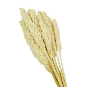 Sorgo Bianco Naturale Stabilizzato Composizione Floreale Matrimonio