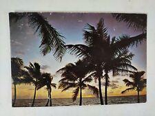 Florida Palms Sunset Sky Postcard 1960s-70s Vintage