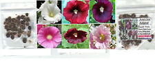 New listing Hollyhock Biennial Old Fashion Flowers All Mixed Colors in one pack of 25 Seeds