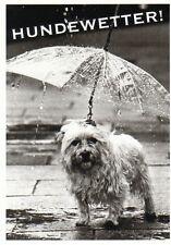 Cartolina: cani meteo-CANE CON OMBRELLO-dog with Umbrella