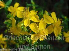 Johanniskraut Hypericum wertvolle Heilpflanze Kräuter 50 frische Samen Balkon
