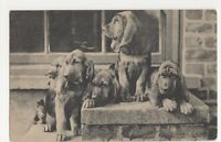 Dogs, Blood Hounds Postcard, B268