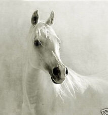 Realism art Oil painting nice animal white horse head on canvas