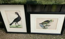 More details for antique pair of 18th century f.p nodder & co bird prints coloured engraving art