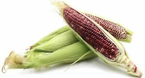 Organic 20 Red Waxy Corn Seeds Delicious Fruit Vegetable Seed Fresh FrQueensland