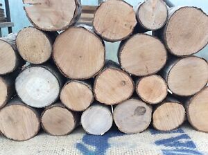 Decorative logs ,fine sawn, slices,display,hardwood BUDGET LOGS (loose bark)