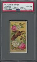 1888 N4 Allen & Ginter Birds of America Small Cuckoo Graded PSA 4