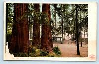 Santa Cruz, CA BIG TREE TRAIN STATION DEPOT REDWOODS PRE 1908 UDB POSTCARD