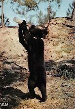BT9217 le clapet royan ours noir black bear cub drinking milk fr  animal animaux