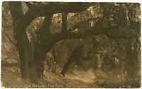 Postcard Near Paso Robles Hot Springs CA Moss Covered Oaks California Sepia