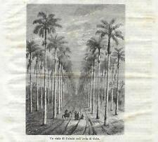 Stampa antica CUBA Viale fra le Palme 1871 Old Antique print