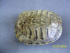 Turtle Shell 7 - 8 in., Crafts,Jewlery,Educational,Taxidermy,Oddity,Educational
