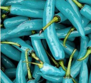100 pcs Blue Naga Jolokia Chilli Seeds - Bhut Jolokia - Ghost Chilli - UK STOCK