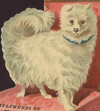 1880's DIE CUT TRADE CARD, PRETTY DOG IN CHAIR,  BRIDGEPORT CT  FREE SHIP, TC244