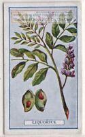 Licorice Spice Flavor  Herb Medicinal Gastritis Eczema 100  Y/O Trade Ad Card G