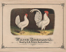 1880s Paper Advertising Sign for White Leghorn Chickens Hartford CT