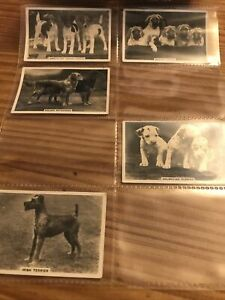 SENIOR SERVICE CIGARETTE CARDS – PART SET – DOGS – VGC