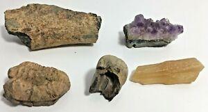 Lot of 2 Crystals & 3 Fossils Trilobite Bones? Quartz? Amethyst Rocks Stones