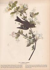 "1942 Vintage AUDUBON BIRDS #115 ""WOOD PEWEE"" PEEWEE Color Art Plate Lithograph"
