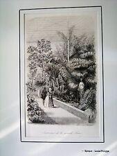 44-50-5 Gravure XIXe jardin scientifique à Paris intérieur de la grande serre