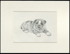 BULLDOG PUPPY CHARMING OLD 1930'S DOG SKETCH PRINT by KF BARKER MOUNTED