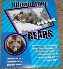 Teacher Resource: Mammal Hibernation: Bears Bulletin Board Chart