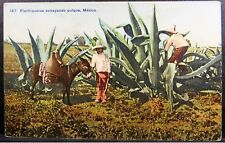 1900s Tlachiqueros Extracting Aguamiel to Make Pulque, MEXICO PC by J Suter