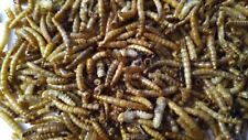 DRIED MEALWORM ON GMO GREAT FOR WILD BIRDS, TURTLES, CHICKEN, FISH AND YOUR PET