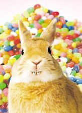 Avanti Bunny In Braces Happy Easter Photo Greeting Card Funny Range Cards